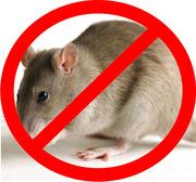 Истребление мышей и крыс в г. Житомир