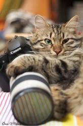 Курсы фотографии.Обучим и трудоустроим. Звоните