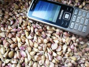 Продам чеснок Семена чеснока