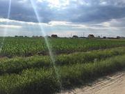 Земля під садівництво,  Брусилів,  Ставище.